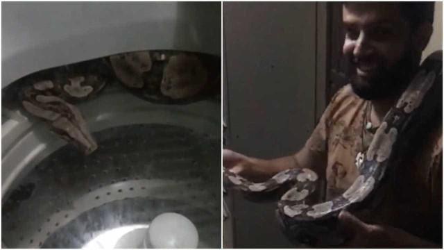 Cobra de dois metros é encontrada em máquina de lavar na Bahia