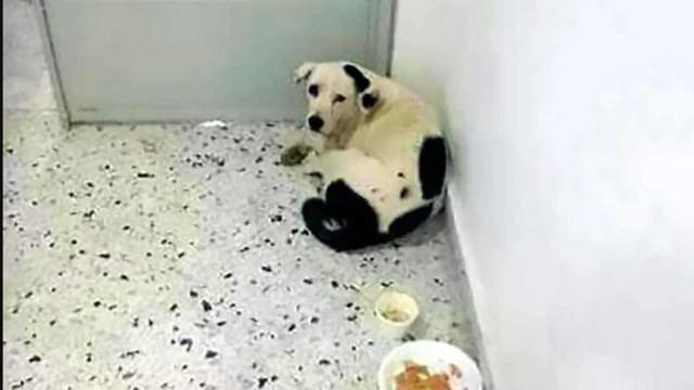 """Cadela abandonada no aeroporto morreu de """"pura tristeza"""""""