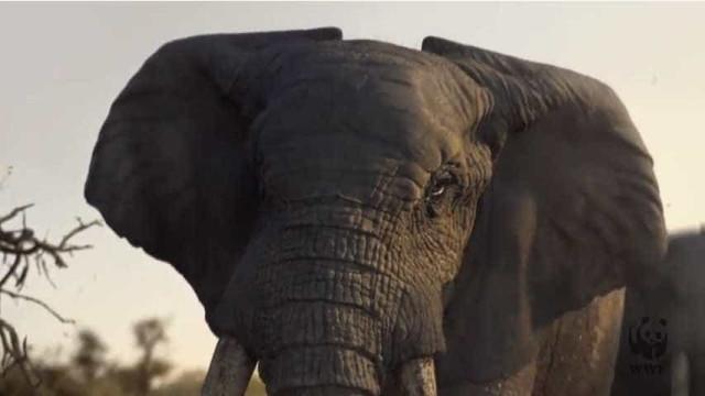 Elefante é protagonista do anúncio mais triste deste Natal