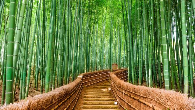 Bambu: Um material super versátil para decorar o lar