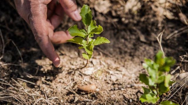 Voluntários da Corticeira Amorim 'dão' ao Alentejo 2.500 novas árvores