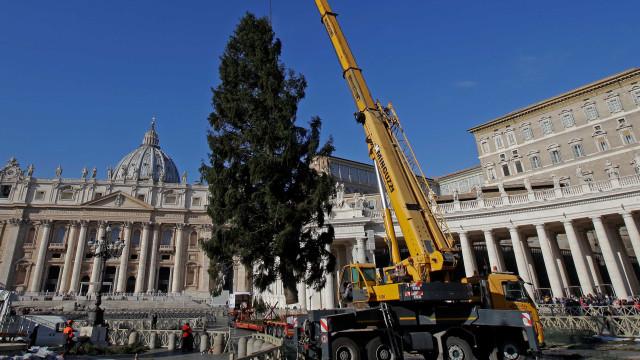 Vaticano já tem árvore de Natal. Levou 12 dias a chegar à Itália