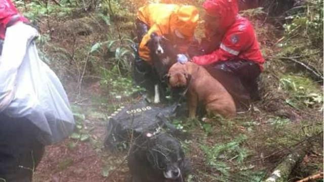 Cães ajudam mulher ferida a sobreviver num território selvagem