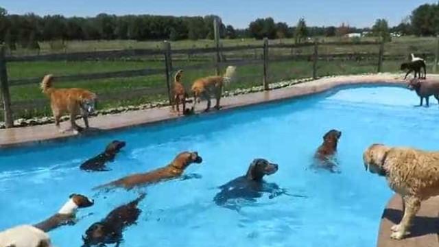 Lucky Puppy: Neste hotel, os patudos são 'reis'
