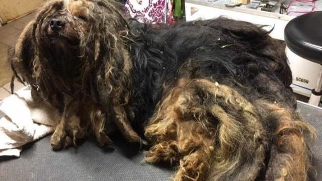 Cão esteve cinco anos trancado numa cave, às escuras e sem atenção