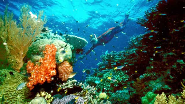 Palau vai proibir alguns protetores solares para proteger os corais
