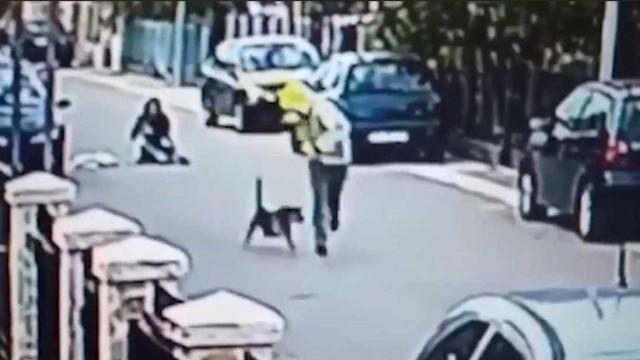 O momento em que um cão vadio salva mulher de ser assaltada