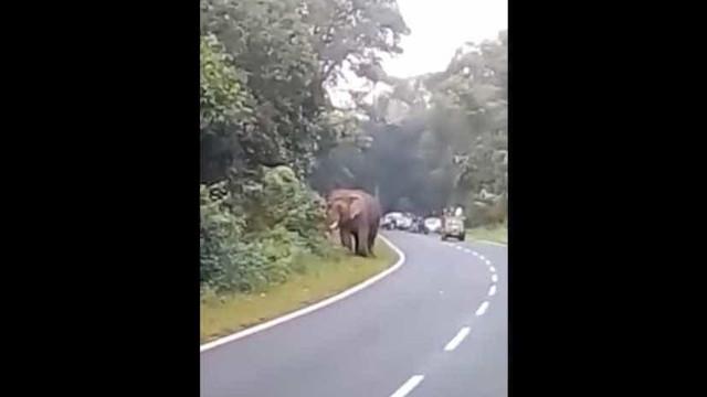 Turista é morto por elefante quando tentava tirar selfie