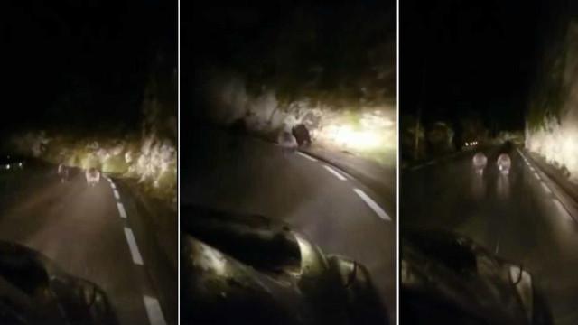 """Dois ursos perseguidos em estrada espanhola. """"É ilegal e perigoso"""""""