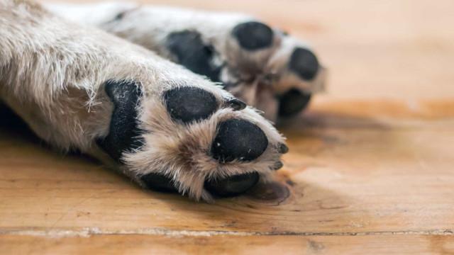 Parlamento aprova resoluções para combater atropelamento de animais