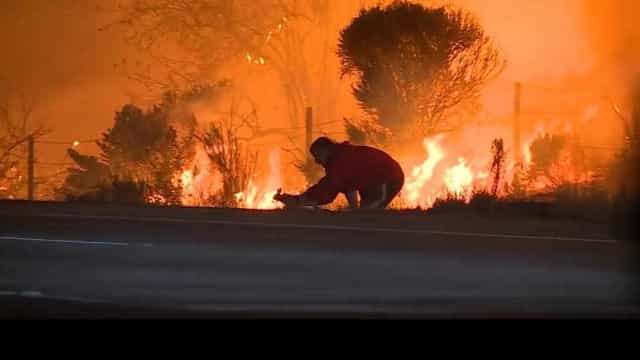 Homem salva coelho dos incêndios que assolam a Califórnia