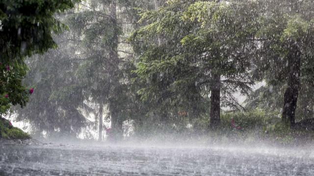 Inundações e quedas de árvores em Lamego, Armamar e Resende