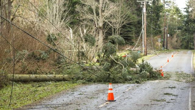 Mais de 20 árvores caíram no distrito de Beja, duas viaturas danificadas