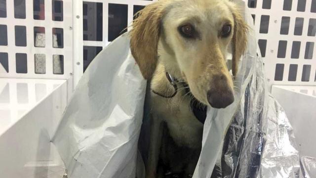 Cão deixado a morrer ao frio salvo pela polícia
