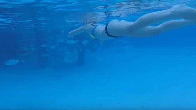 Marido filmou mulher a ser mordida por tubarão