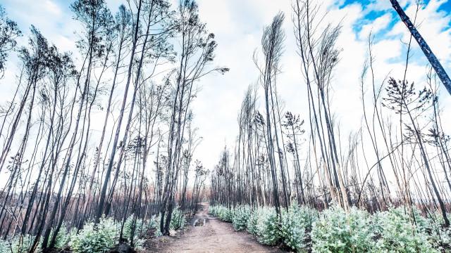 Governo adota nova medida para apoio à reflorestação
