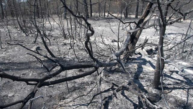 "Governo assume como ""prioridade absoluta"" limpeza do mato até maio"