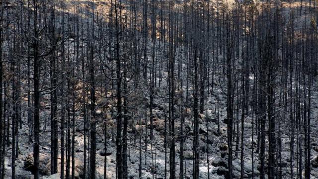 Investigação da PJ ao fogo no Pinhal de Leiria está em fase de conclusão