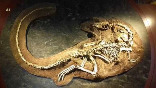 Criatura parecida com dinossauro encontrada ainda com carne nos ossos