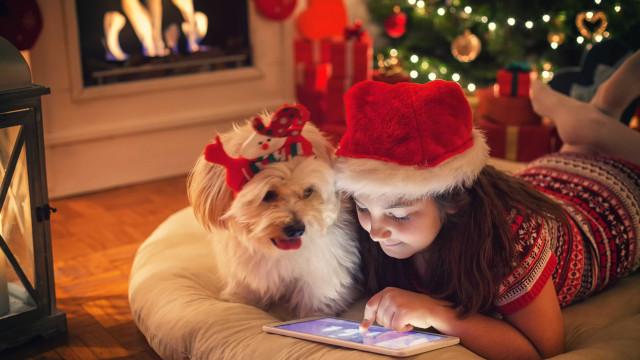 O Natal também é para eles. 15 presentes para os patudos