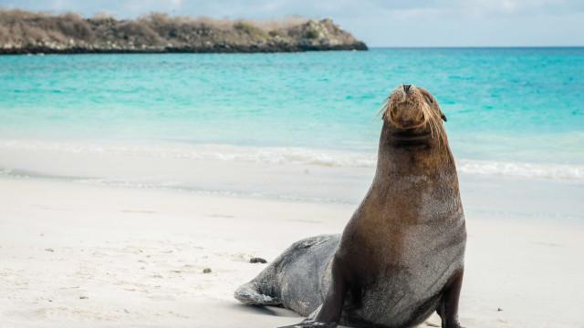 São Francisco: Zona de banhos fechada após dois ataques de leões-marinhos