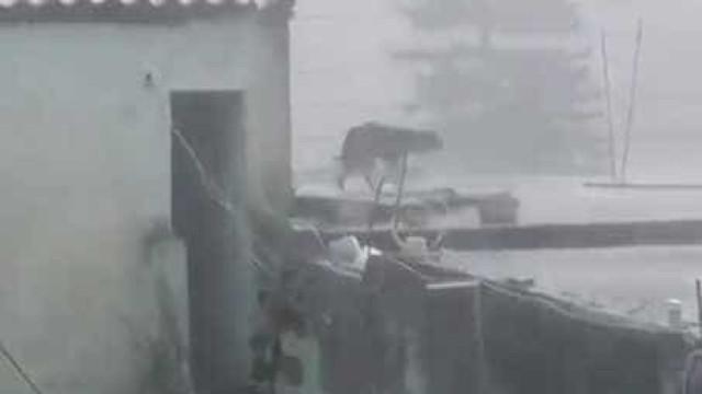 Chovia torrencialmente e abandonaram cão preso no telhado
