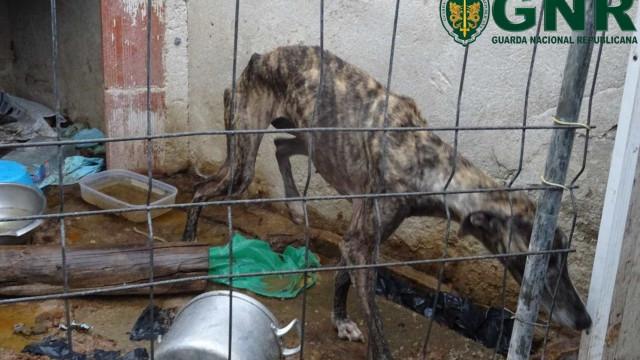 Animal encontrado em graves condições. Dono estava fora do país