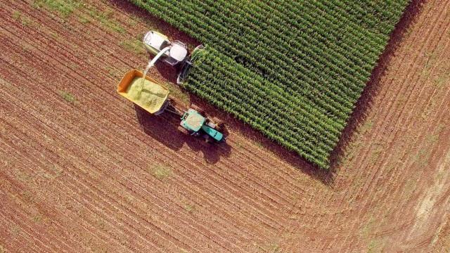 Confirmada utilização de fezes humanas na produção hortícola em Luanda
