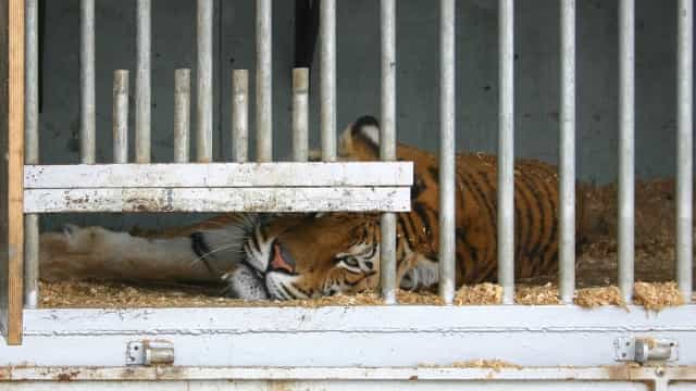 Assembleia da República aprova fim do uso de animais no circo