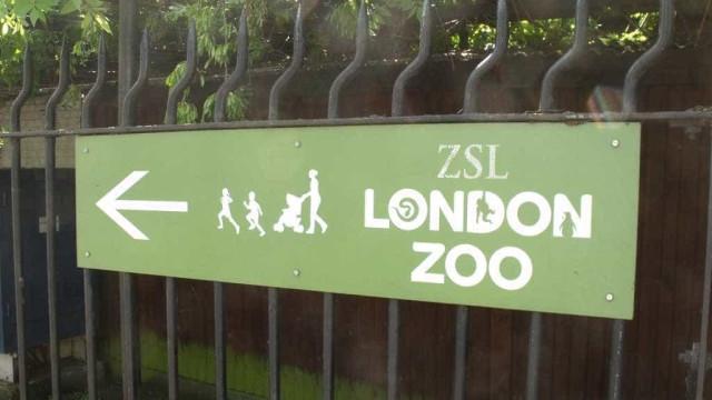 Oito pessoas assistidas e um animal morto em incêndio no Zoo de Londres