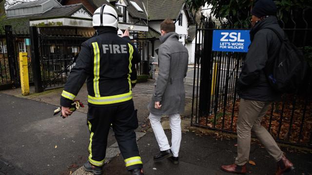 Zoo de Londres reaberto depois de incêndio que matou cinco animais