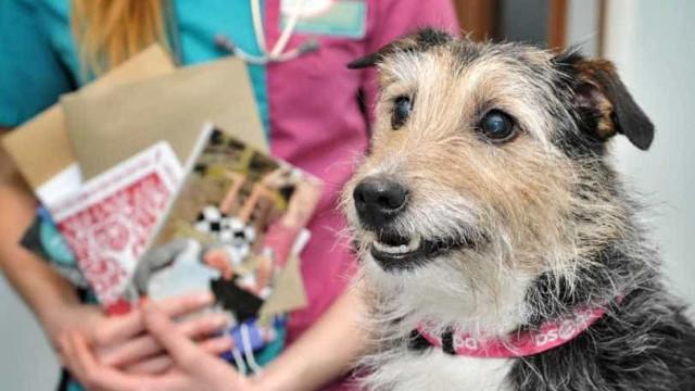 Cão fica com boca colada... após comer folhetos de publicidade
