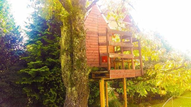 Menino de 4 anos morre depois de casa na árvore lhe cair em cima