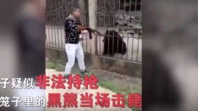 Turista chinês matou urso com arma de fogo