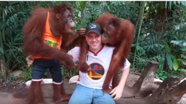 Estes são provavelmente os orangotangos mais 'beijoqueiros' do universo