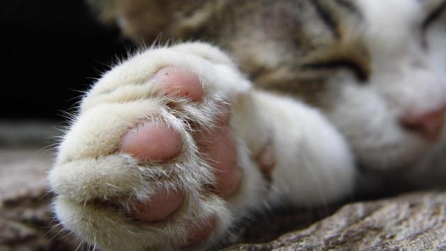 Gato morre após explosão de petardo que lhe puseram na boca