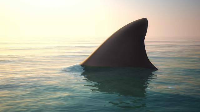 Homem tem de amputar perna depois de ataque de tubarão no Brasil