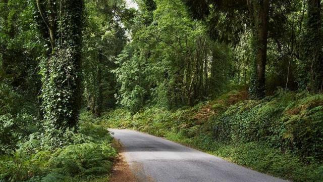 Sintra: Bloco preocupado com Plano de Defesa da Floresta contra incêndios