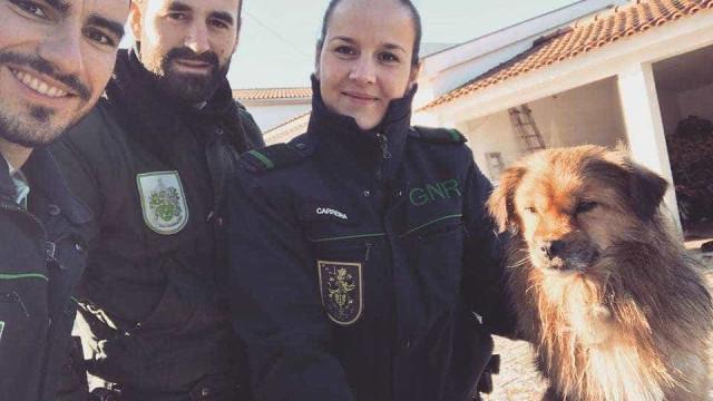 História com final feliz: GNR resgata cão abandonado no IC2
