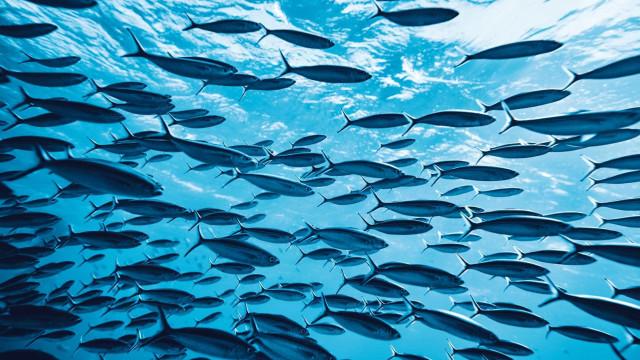 """Cientistas descobrem segunda população de peixes que """"caminham"""""""