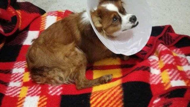Cão abandonado em Soure foi mordido pelos outros cães mas encontra-se bem