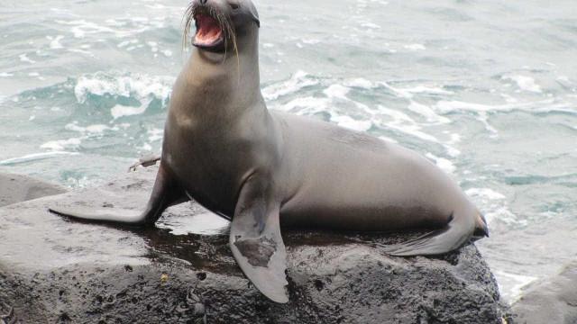 Encontrada pen USB em fezes congeladas de leão marinho. E ainda funciona