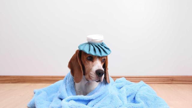 Como proteger o seu cão das temperaturas frias e da gripe