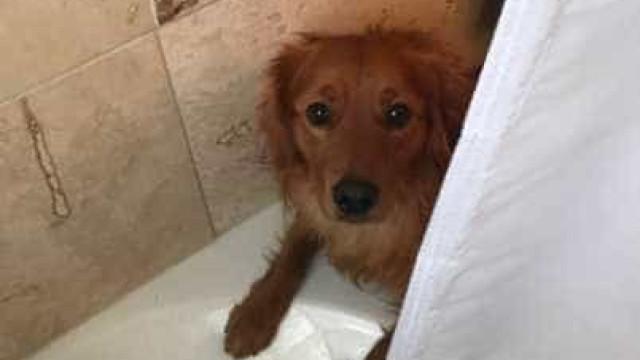 Cão está sempre a interromper os donos no banho. Quer 'salvá-los'