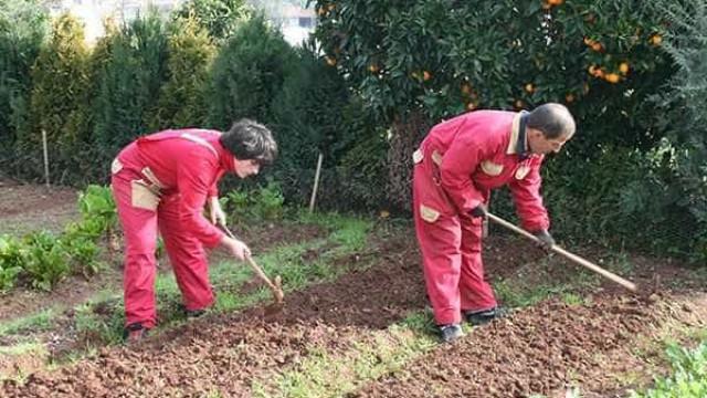 'Ervas daninhas': O projeto que é muito mais que um curso de jardinagem