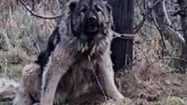 Polícia abate cão abandonado a tiro e gera indignação