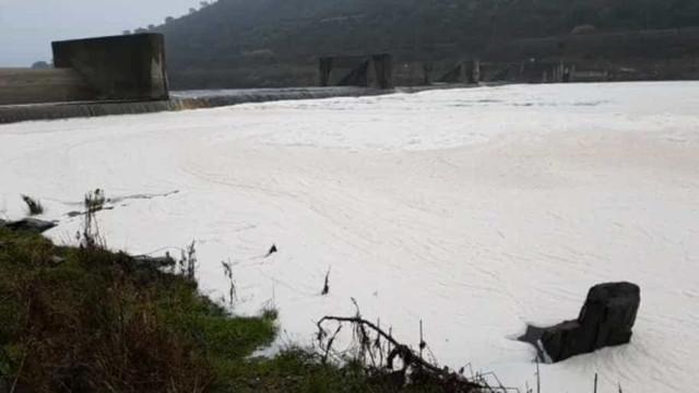 """Verdes exigem respostas do Governo sobre """"verdadeiro esgoto"""" no rio Tejo"""