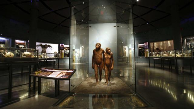 Homo Sapiens: Dedo com 90 mil anos revela dados inéditos sobre migrações