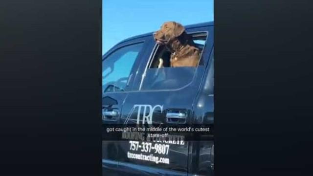 A troca de olhares... entre dois cães