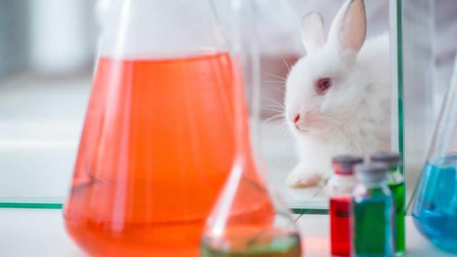Testes em animais: Um mal necessário ou pura crueldade?